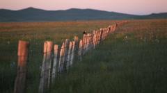 Camas Marsh Bird Fence  29.97p Stock Footage
