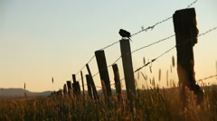Marsh Bird Fence 29.97p Stock Footage