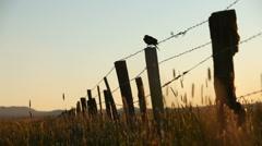 Marsh Bird Fence 29.97p Arkistovideo