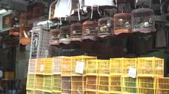 Market. Birds. Stock Footage