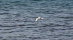 Albatross Stock Footage