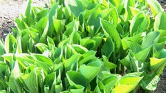Greens Stock Footage