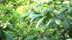Spring Garden 3 Stock Footage