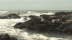 Sea Lions On Rocks - stock footage