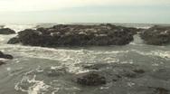 Sea Lions On Rocks 5 Stock Footage