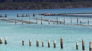 Oyster Farms - Forster Australia, Aquaculture Farming Stock Footage