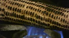 Corn cob - stock footage