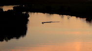 Water skiing on river at colorful sunset Stock Footage