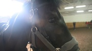 Stock Video Footage of Horse