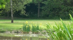 Parkland Pond and Flowers - stock footage
