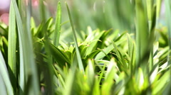 Green Lawn Stock Footage