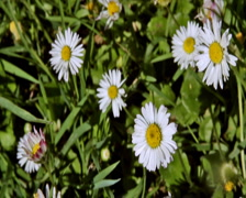 0061 Flores PAL Stock Footage