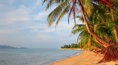 Tropical beach and palm tree Stock Footage