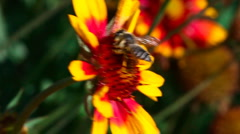 Working bee. Stock Footage