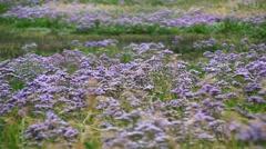 Meadow on Hallig island, North Sea, Germany Stock Footage