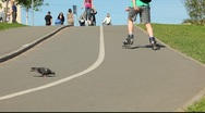 Stock Video Footage of Inline skater ride up the road