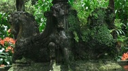 Stock Video Footage of Font in tropical garden 20110422 135423