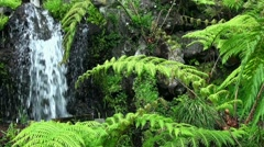 Fern and Spring 20110422 141221 Stock Footage