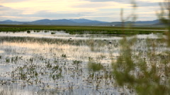 Marsh Sunset 3419 Stock Footage