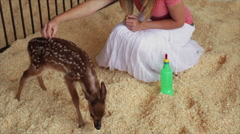 Girl petting fawn Stock Footage