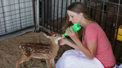 Girl feeding a fawn Stock Footage