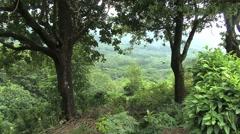 Moorea forest in valley below Stock Footage