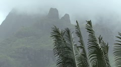 Moorea ferns and misty mountain Stock Footage