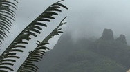 Moorea fern and mist Stock Footage