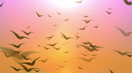 Birds Flying Loop 4 Stock Footage
