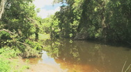 Creek with reflections Motion JPEG Stock Footage