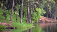 Forest over the pond Stock Footage