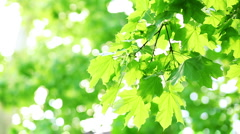 Wind in branches of tree Stock Footage