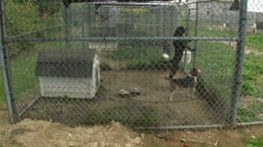 0900-0043 - Outdoor Kennels Stock Footage