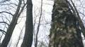 forest, autumn 002 Footage