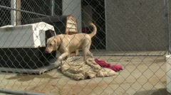0900-0035 - Outdoor Kennels Stock Footage