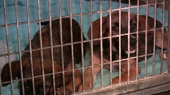 0900-0033 - Kennels - stock footage