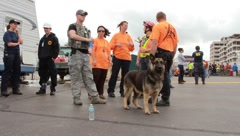 K9 Search And Rescue Ready To Search For People In Tornado Reckage (HD) c Stock Footage