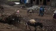 Farmer mule ethiopia Stock Footage