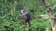 Elephant safari Stock Footage
