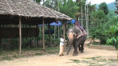 Elephant safari Stock Footage