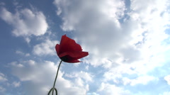 Poppies moving in the wind against blue sky Stock Footage