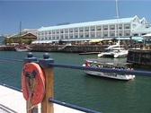 Tourist Boat at V&A Waterfront with Seal behind, Cape Town GFSD Stock Footage