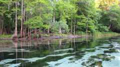 Cypress Springs Creek Wide Tracking Shot Stock Footage