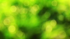 Nice green nature foliage bokeh from spring forest Stock Footage