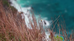 25 Grass sways in the background of the sea - stock footage