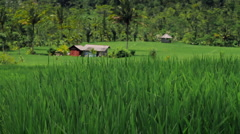 29 Rice terrace in Indonesia Stock Footage