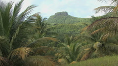 Raiatea interior with palm trees Stock Footage