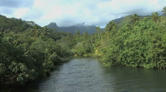 Raiatea vegetation by river - stock footage