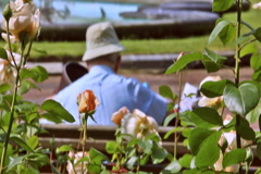 0074 Flores NTSC Stock Footage