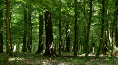 Forest detail - stock footage